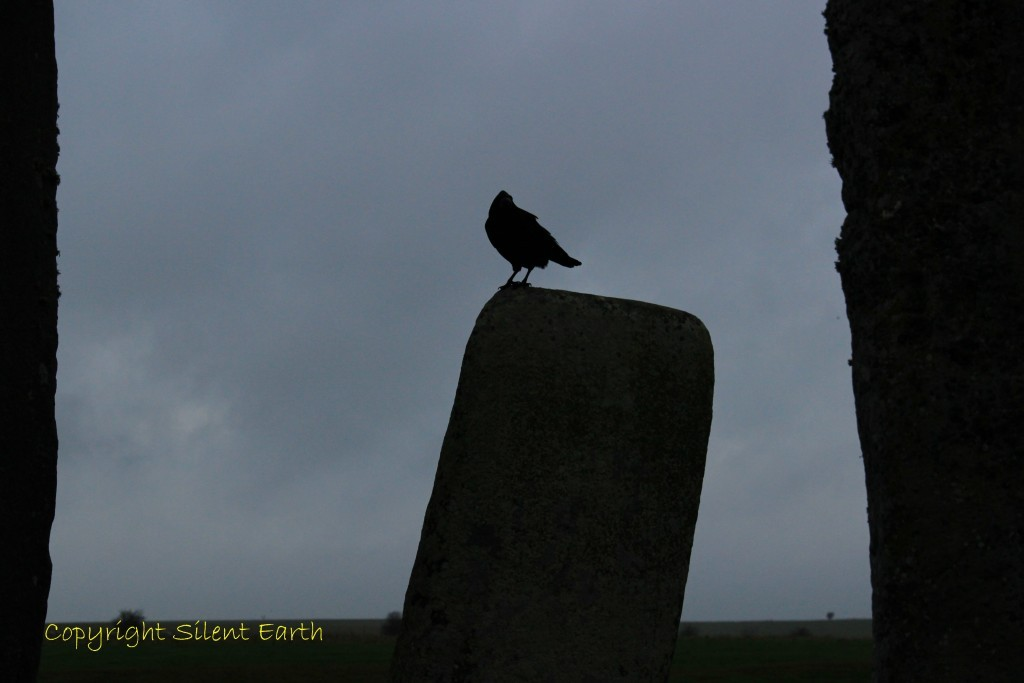 Birds of Stonehenge