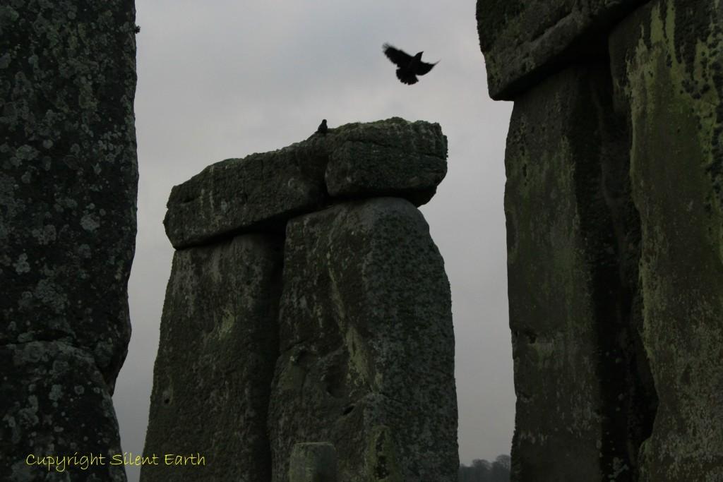 Rooks of Stonehenge