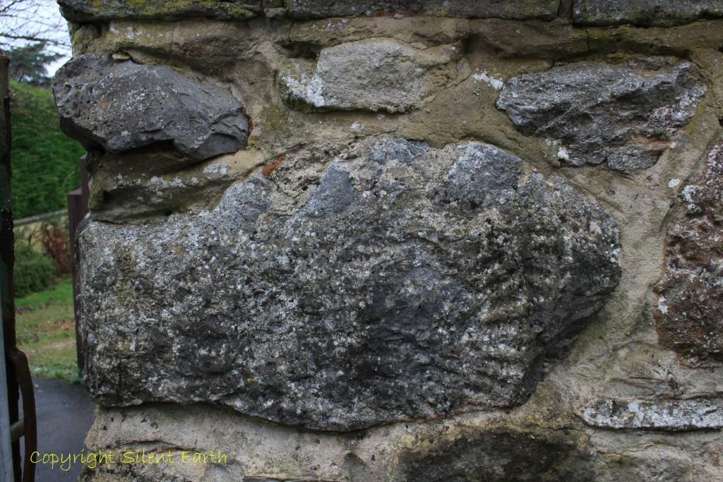 Stanton Drew fossil