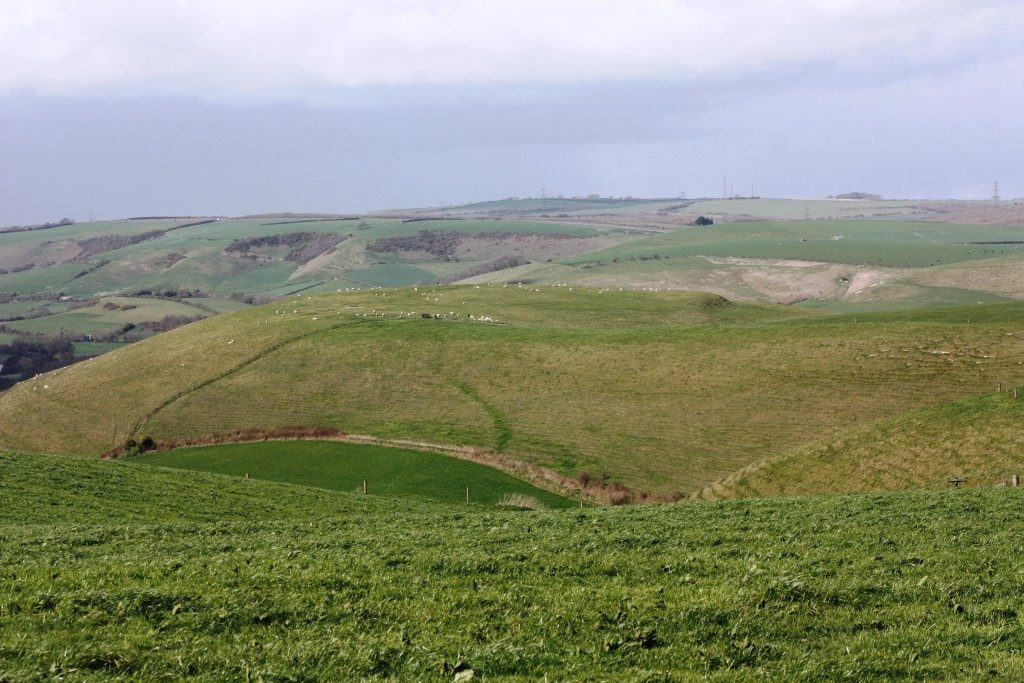 Old Warren earthwork Dorset